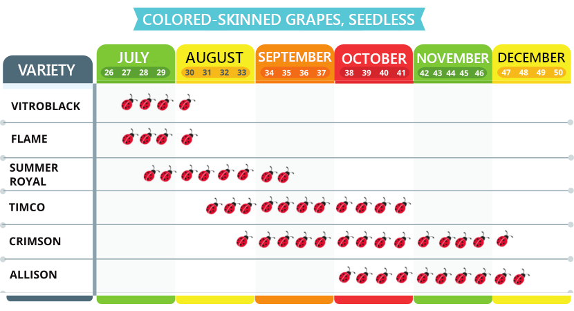 Colored grapes, seedless