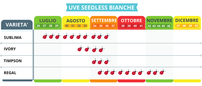Uve seedless bianche