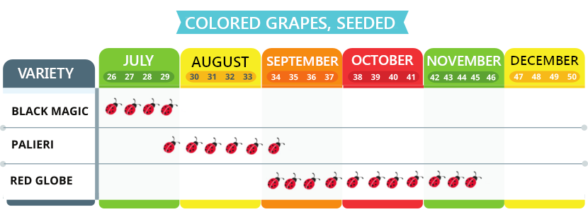 Colored grapes, seeded