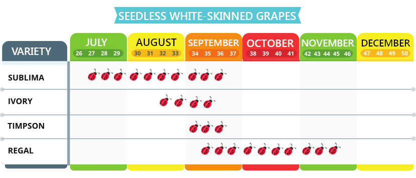 White-skinned grapes, seedless
